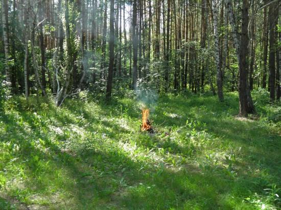 Отдых в лесу