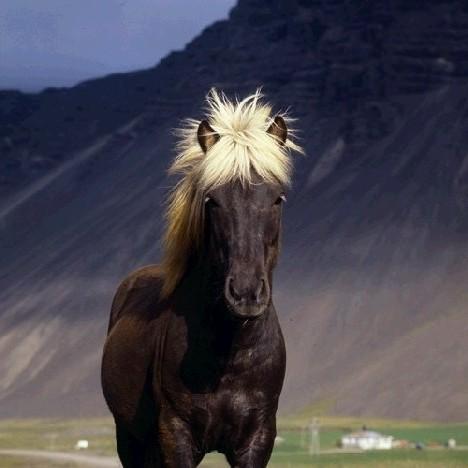 Лошадка с ледяной гривой