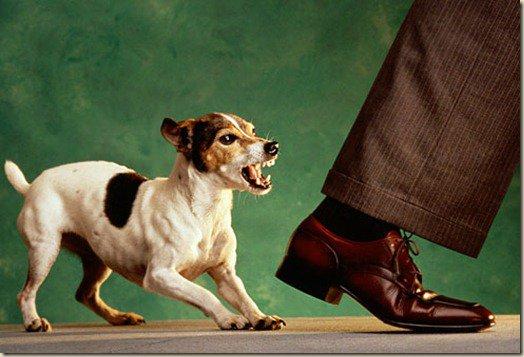 Цап или осторожно, злая собака!
