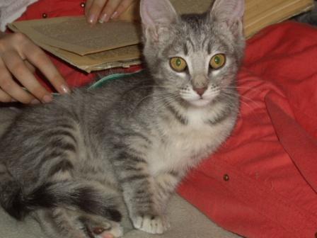Все 11 лет с нами живет наш кот… 3,5 года из которых - во второй своей реинкарнации