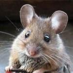 Мышь в банке 2