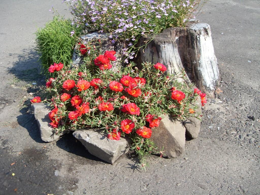 Цветы для свекрови
