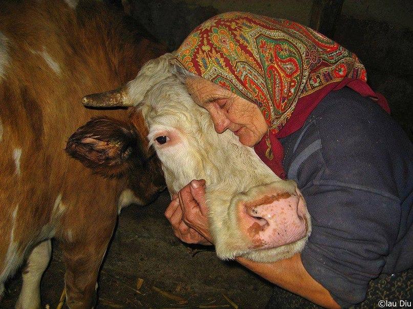 Чья корова мычала..