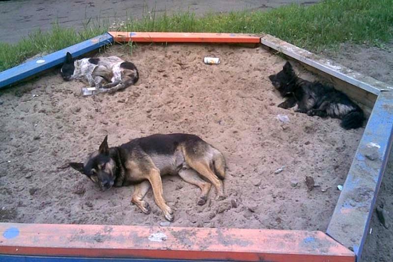 Любовь к бродячим собакам или капля здравого смысла...