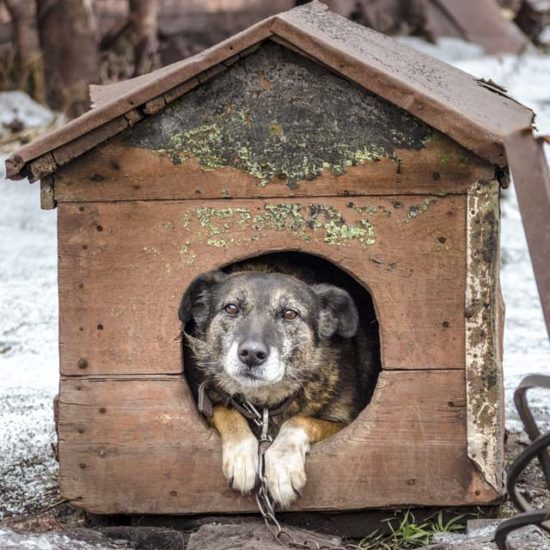 Старый пёс в будке