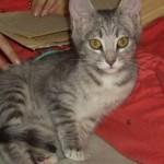 Все 11 лет с нами живет наш кот… 3,5 года из которых — во второй своей реинкарнации