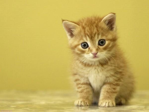 Котенок, которого я спас