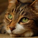 Необычная кошка