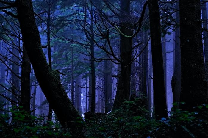 Две ночи в лесу