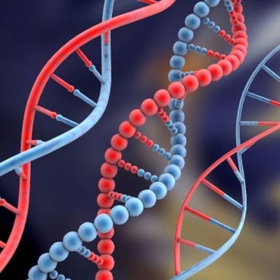 Преступления в генах