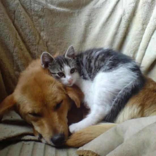 Дружба Кузи и Кити