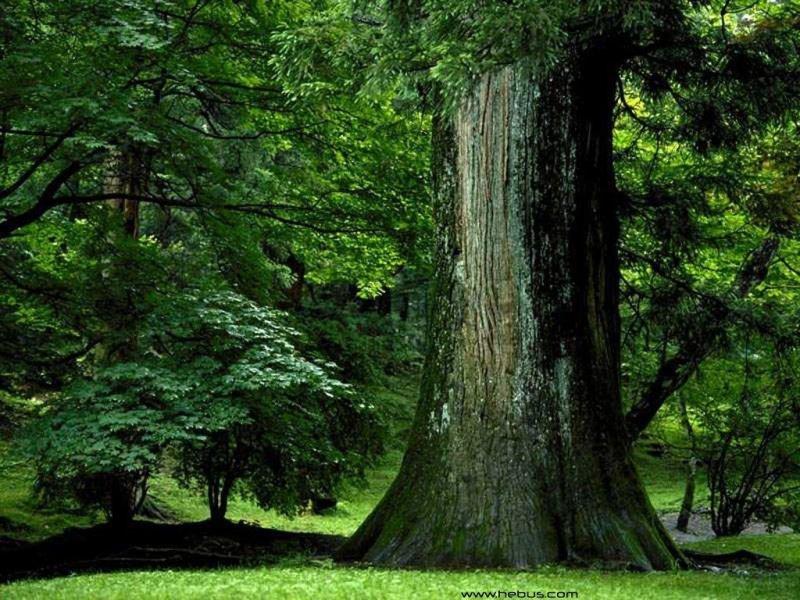 Ностальгия по шашлыкам или экологическое воспитание