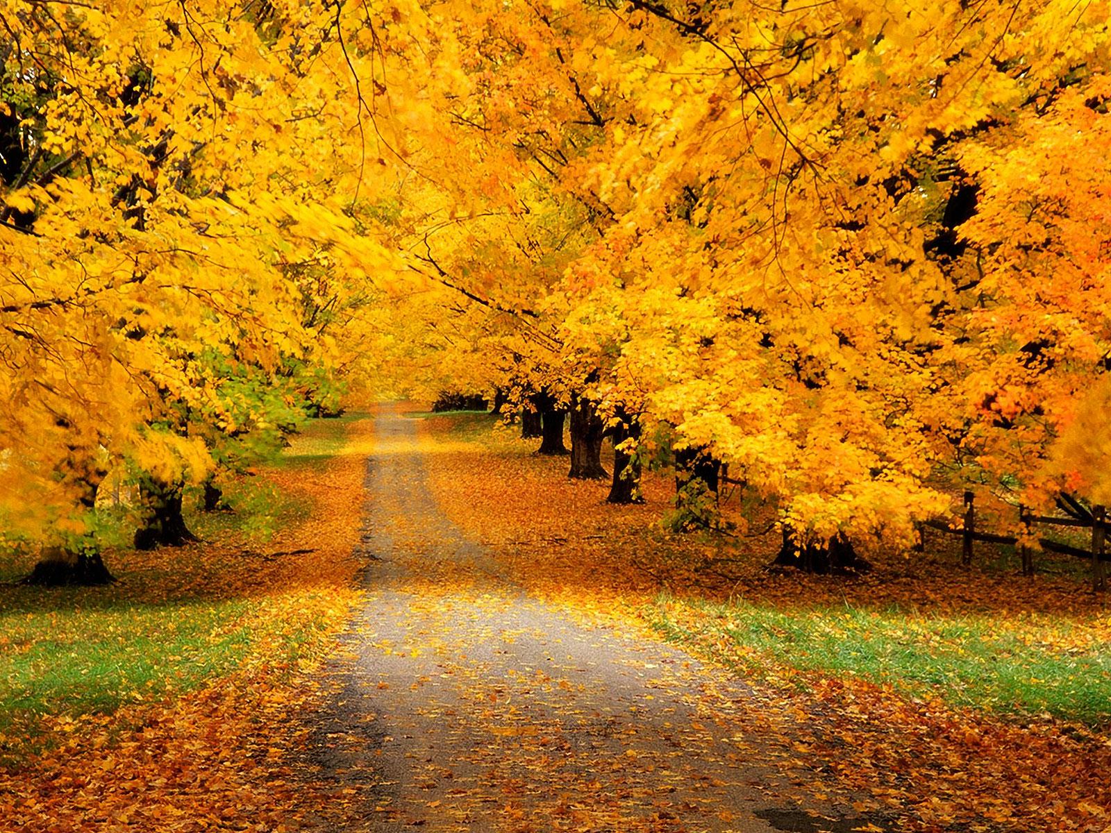 Осенний извращенец