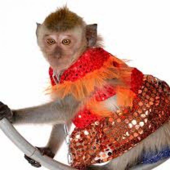 Дама с обезьяной