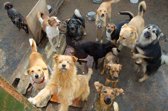 Много бездомных собак